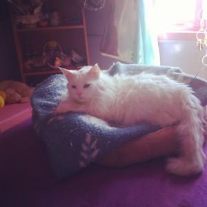 Mi gatito <3